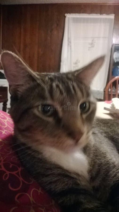 Regola dei gatti fotografia stock libera da diritti