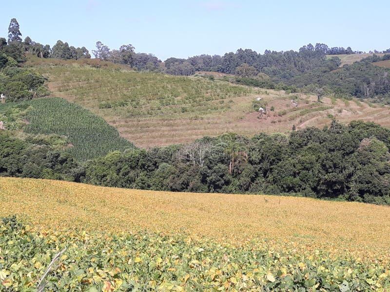 Regolazione adorabile con le montagne, l'erba ed il cielo blu immagini stock libere da diritti