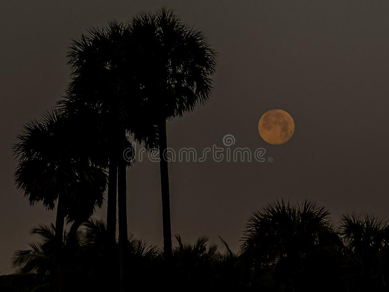 Regolazione della luna dietro le palme fotografie stock libere da diritti