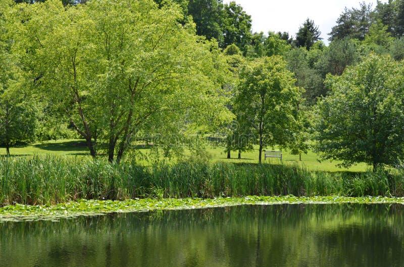 Regolazione dello stagno di estate di Cornell Botanical Garden fotografie stock