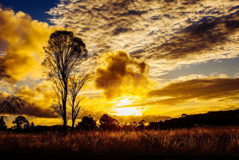 Regolazione sbalorditiva del sole di tramonto dietro l'albero, montagne Australia rurale immagine stock