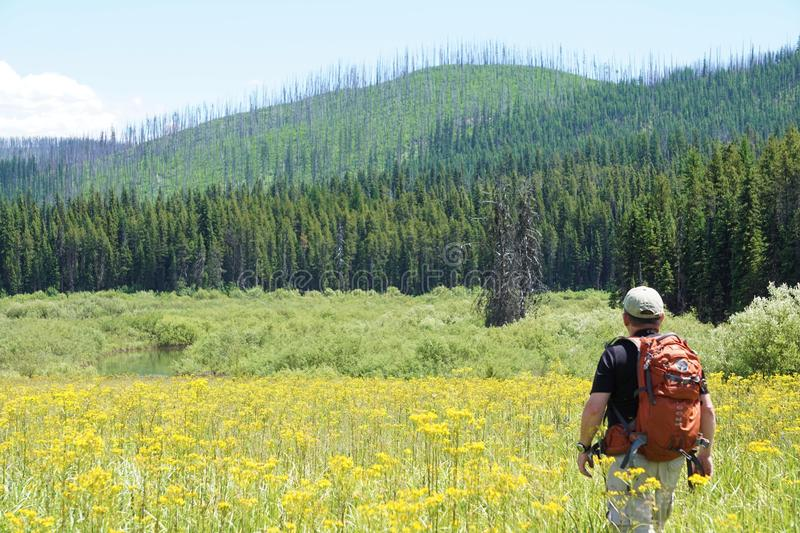 Regrowth from old forest fires in Glacier National Park stock photos