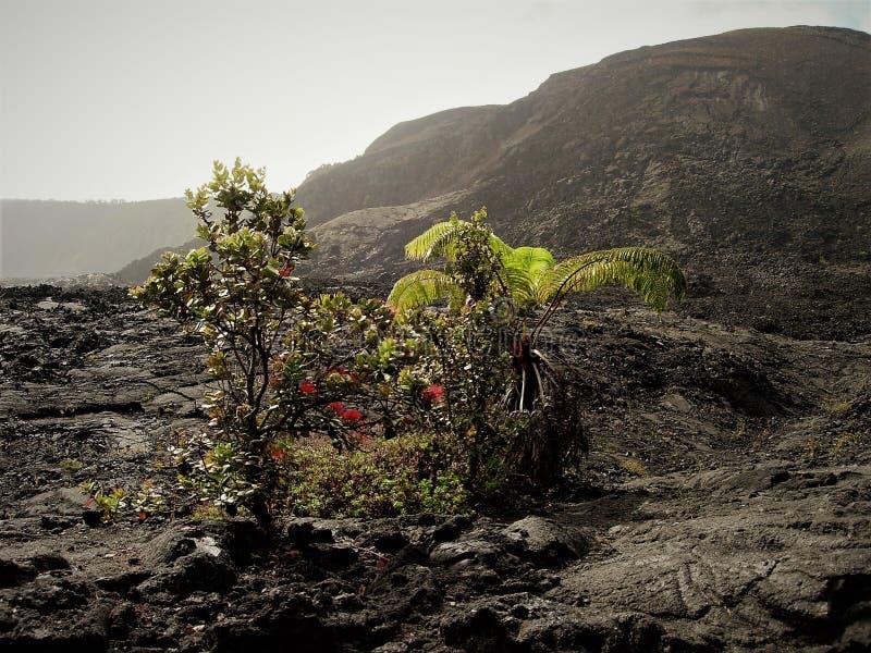 Regrowth vom Fluss, von den Bäumen und von den Farnen, die aus Lava heraus wachsen stockfoto
