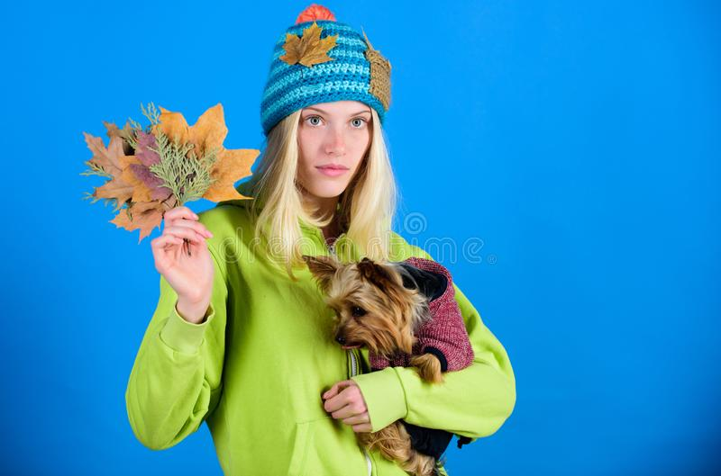 Regular flea treatment. Girl hug cute dog and hold fallen leaves. Woman carry yorkshire terrier. Take care pet autumn. Veterinary medicine concept. Health care royalty free stock photography