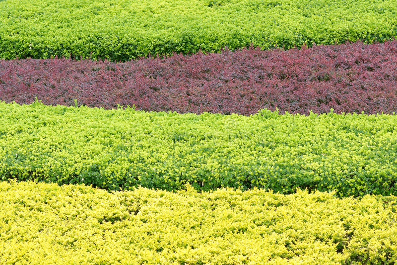 Download Regular Shrubbery Royalty Free Stock Photo - Image: 25111245