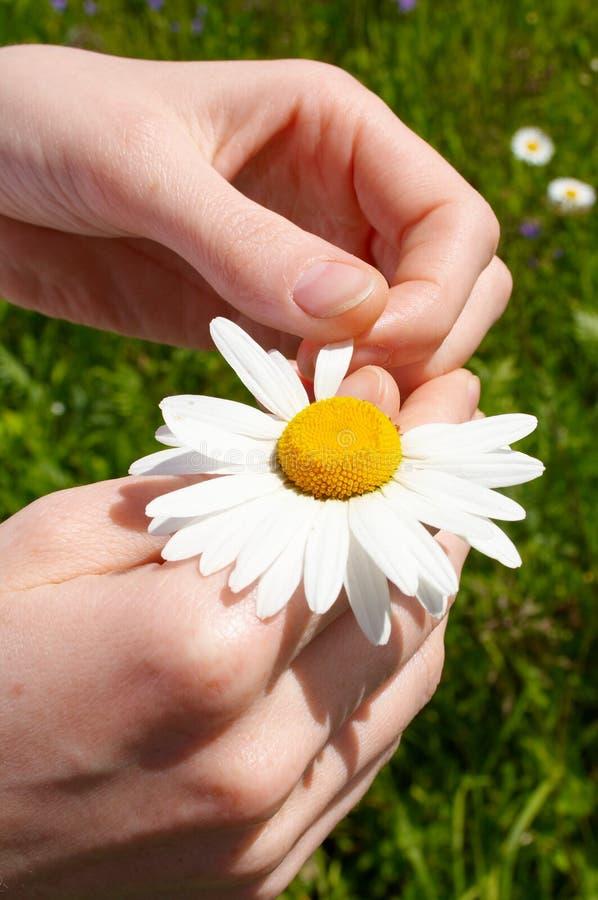 Reißen Sie Blumenblätter auseinander lizenzfreie stockfotografie