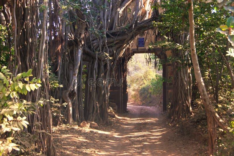 Reißen Sie Tor zu Nationalpark Ranthambore, Indien hin stockbilder