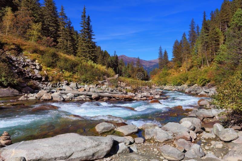 Reißender Fluss von Koniferenwäldern stockbild