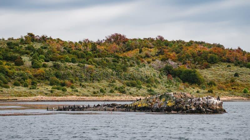 Rei Cormorants e florestas e ba?as coloridas m?gicas do conto de fadas em Tierra del Fuego National Park, canal do lebreiro, Pata fotografia de stock royalty free