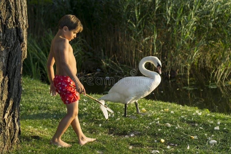 Rei das cisnes