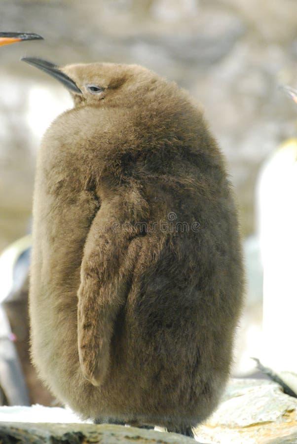 Rei Penguin Chick com lotes de penas fofos imagem de stock royalty free