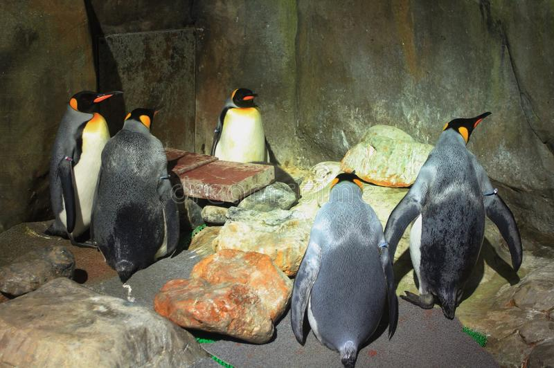 Rei Penguins fotografia de stock royalty free