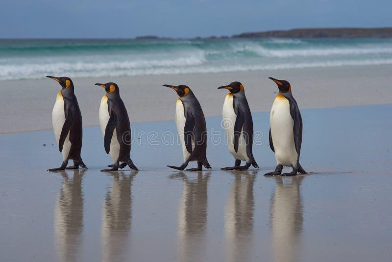 Rei pinguins - Ilhas Falkland fotos de stock royalty free