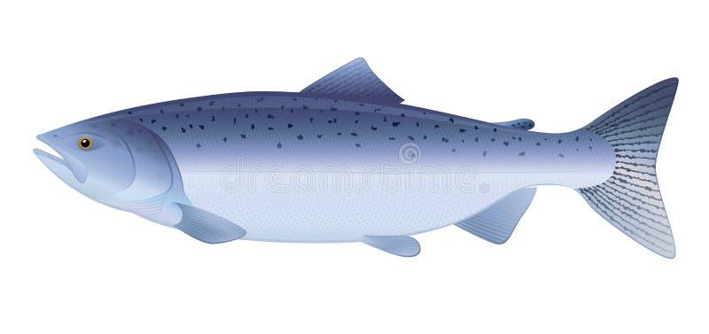 Rei salmão ilustração royalty free
