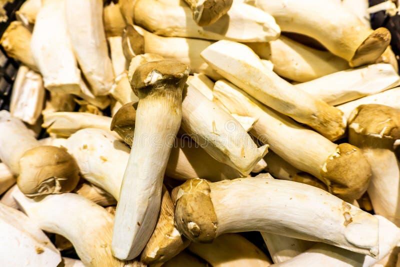 Rei Trumpet Mushroom fotos de stock royalty free