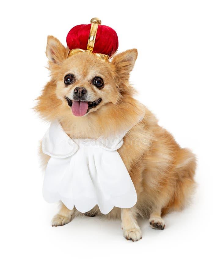 Rei vestindo Costume do cão de Pomeranian imagens de stock