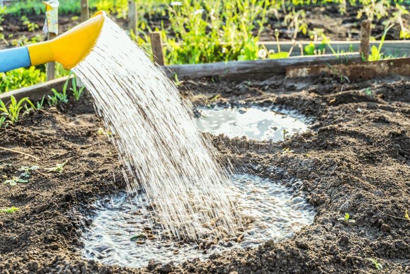 Reichliche Bewässerung von Anlagen im Loch von der Gartengießkanne stockfoto