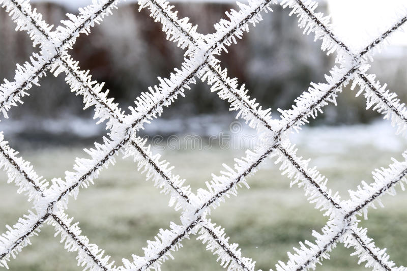 Reif auf dem Gitter lizenzfreie stockfotografie