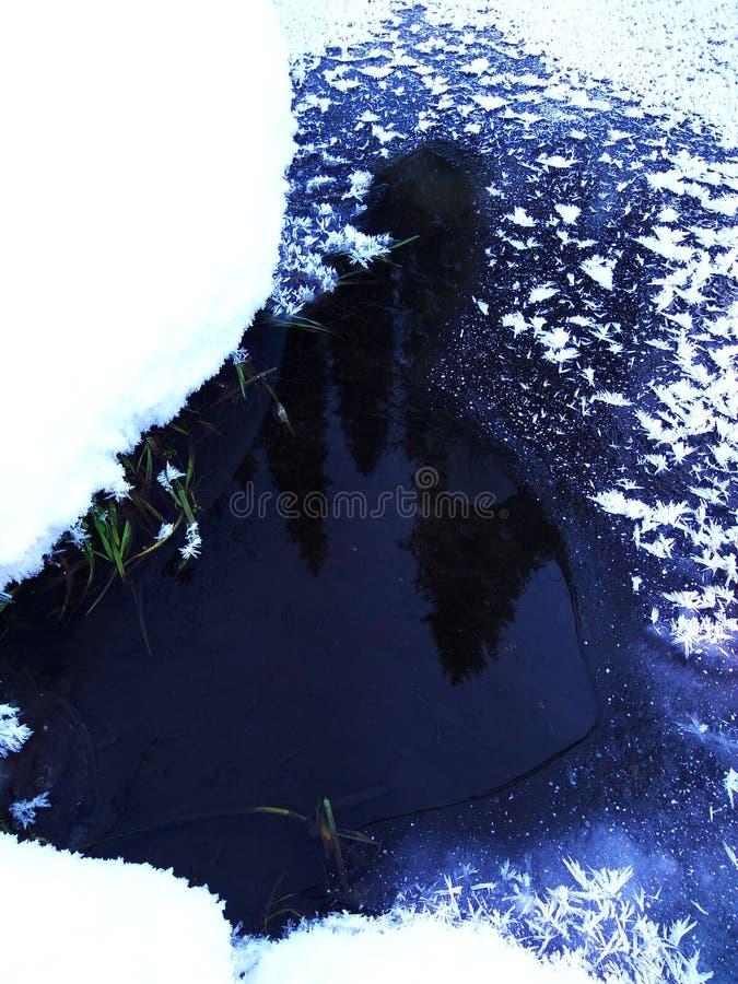 Reif auf Eis 2 lizenzfreies stockbild