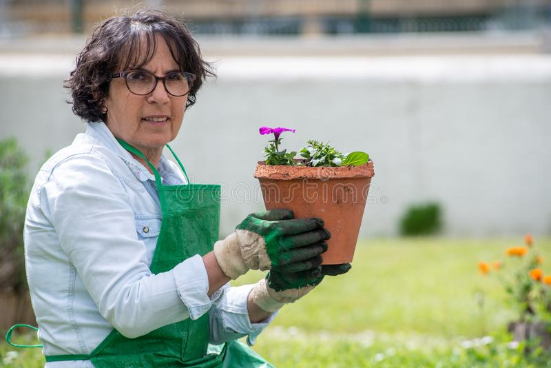 Reife Frau Potting-Pelargonienblumen lizenzfreie stockfotos