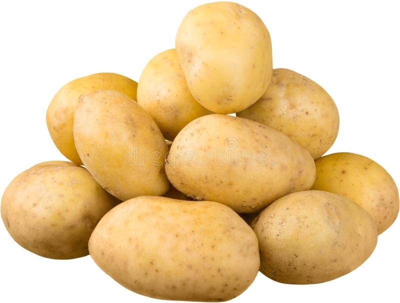Reife frische Kartoffeln auf weißem Hintergrund stockfotos