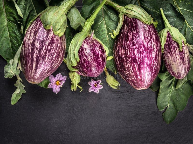 Reife gestreifte Auberginen mit Blättern und Blumen auf dunkler Schiefertabelle lizenzfreie stockbilder