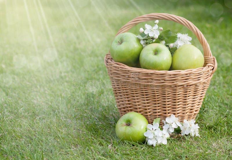 Reife grüne Äpfel mit Blumen im Korb stockfoto