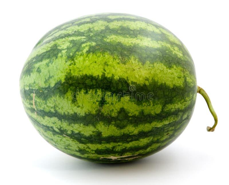 Reife grüne Wassermelone stockfoto
