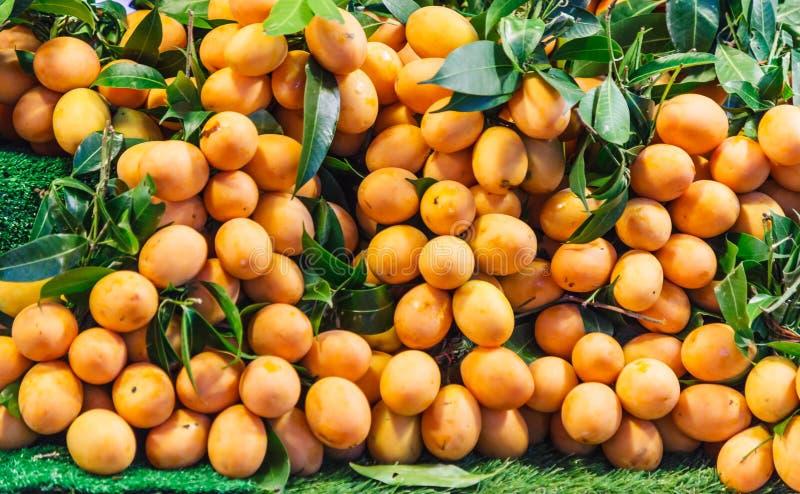 Reife Leuchtorange süßer Maprang Marian Mango, Plum Mango, Marian Plum, Gandaria, Mayong Chid, traditionelle thailändische tropis stockfotografie