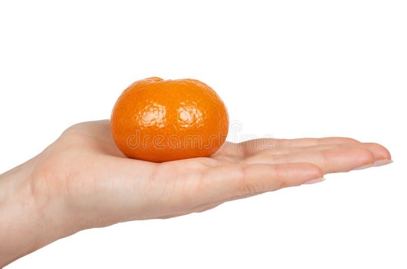 Reife Mandarine, Zitrusfruchttangerine, Orange in der Hand Getrennt auf weißem Hintergrund stockbild