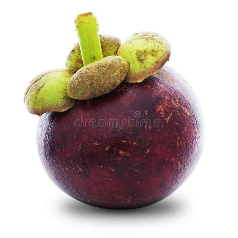 Reife Mangostanfrucht lizenzfreie stockfotografie