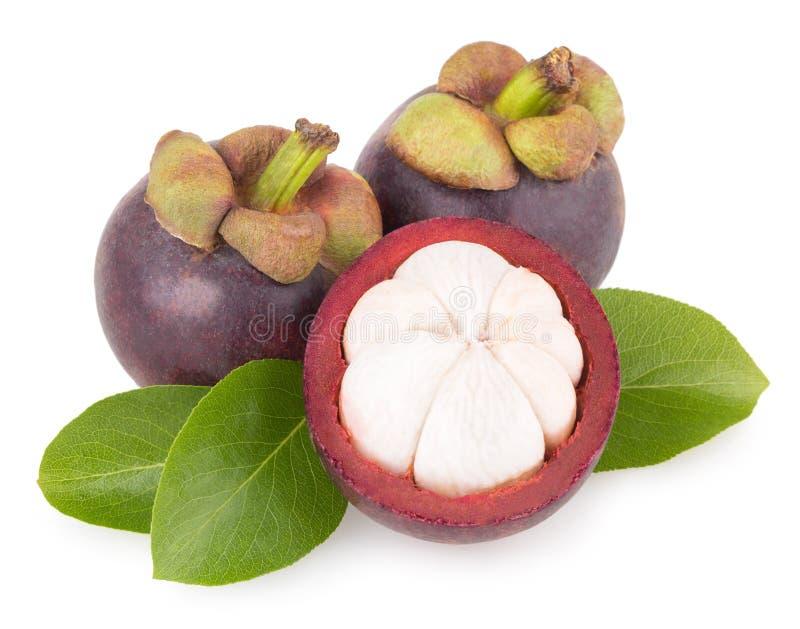 Reife Mangostanfrucht lizenzfreies stockbild