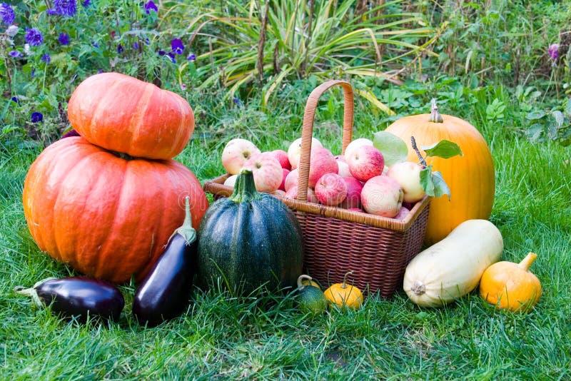 Reife Obst und Gemüse stockbilder
