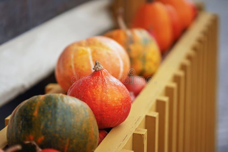Reife orange organische Nahaufnahme des Kürbises in Folge, selectiv Fokus Am 28 Herbst, Fallhintergrund lizenzfreies stockbild