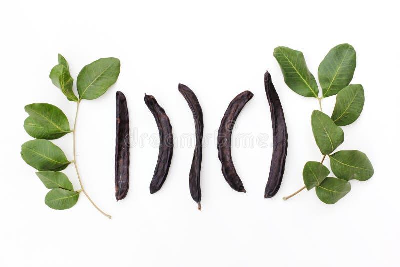 Reife organische Johannisbrotbaumfruchthülsen und grüne Blätter von der Heimat USA auf weißem Hintergrund Gesunde Alternative zum stockfotos