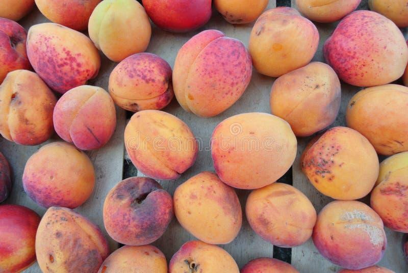 Reife organische orange Aprikosen verpackten in einer hölzernen Kiste lizenzfreie stockfotografie