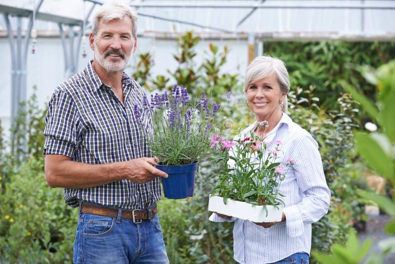Reife Paare, die Anlagen in Garten-Center wählen lizenzfreie stockfotos