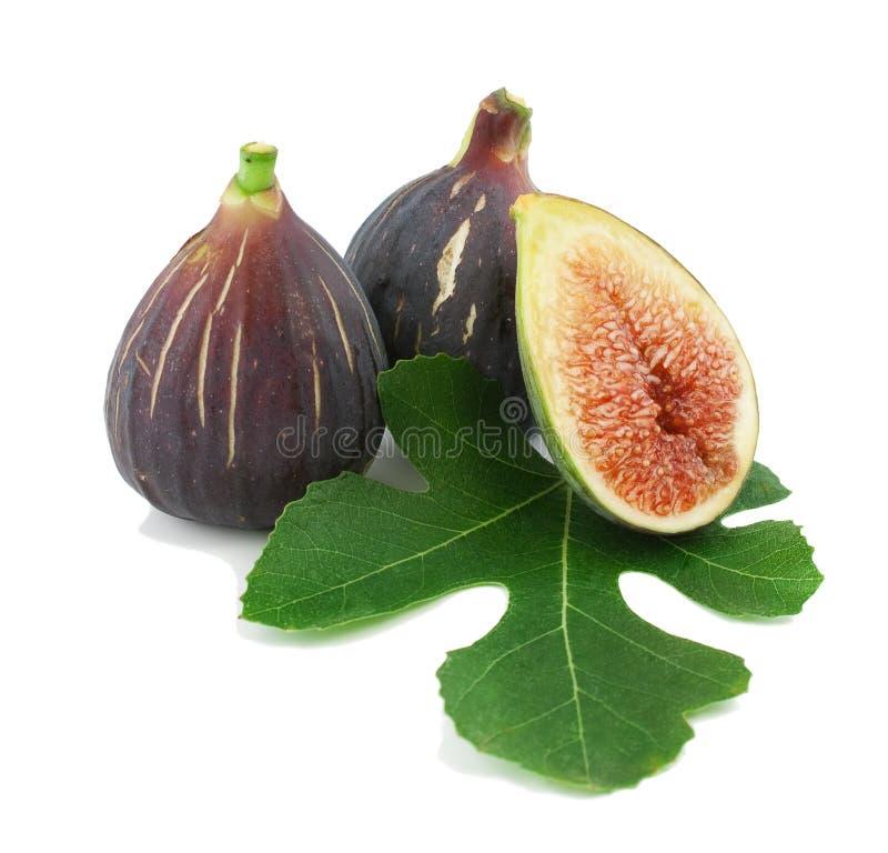 Reife purpurrote Feigefrüchte und -blatt lizenzfreie stockfotos