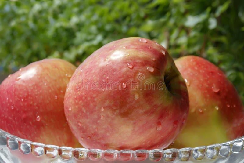 Reife rote Äpfel im Tau in einer Glasschüssel stockbild
