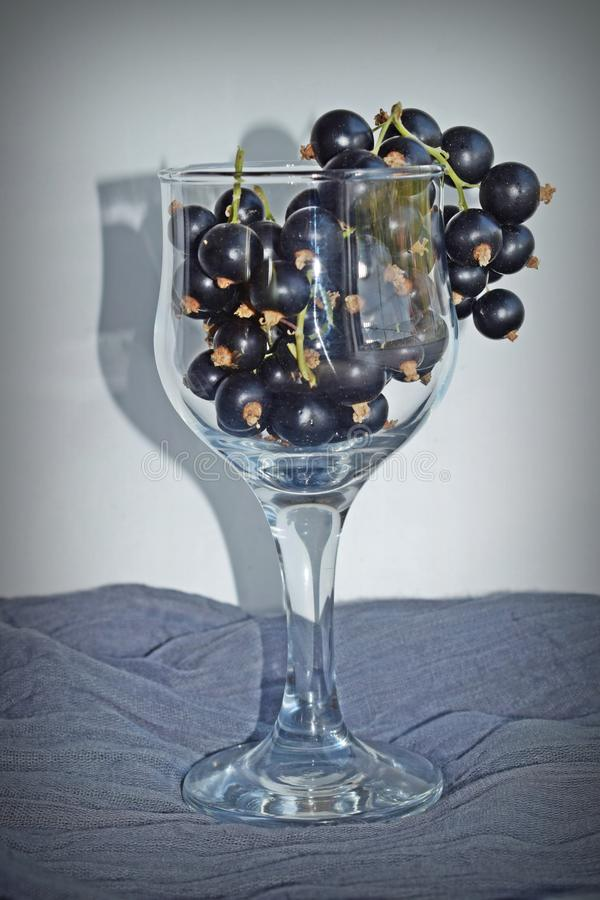 Reife, süße Schwarze Johannisbeere in einem Glasbecher stockbild