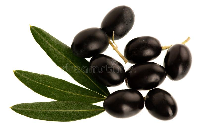 Reife schwarze Oliven auf einer Niederlassung lokalisiert über weißem Hintergrund lizenzfreie stockfotos