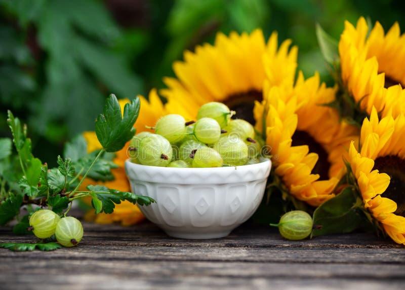 Reife Stachelbeerfr?chte in der wei?en Sch?ssel mit Sonnenblumenblumenstrau? auf Holztisch, Sommerthema lizenzfreie stockbilder
