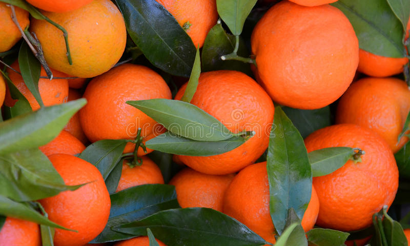 Reife Tangerinen für Verkauf auf einem Landwirt ` s Markt stockfotos