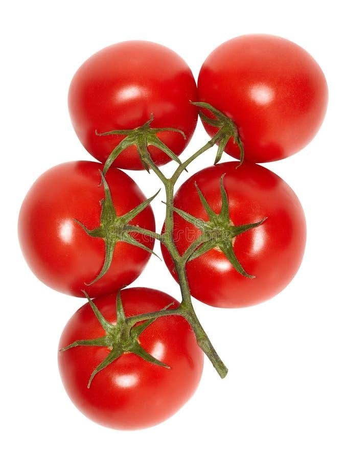 Reife Tomaten der Rebe. stockfotos