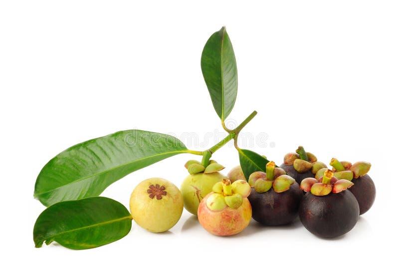 Reife und junge Mangostanfrucht auf Weiß stockfotografie