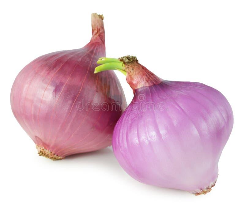 Reife Zwiebel auf einem weißen Hintergrund stockfotografie