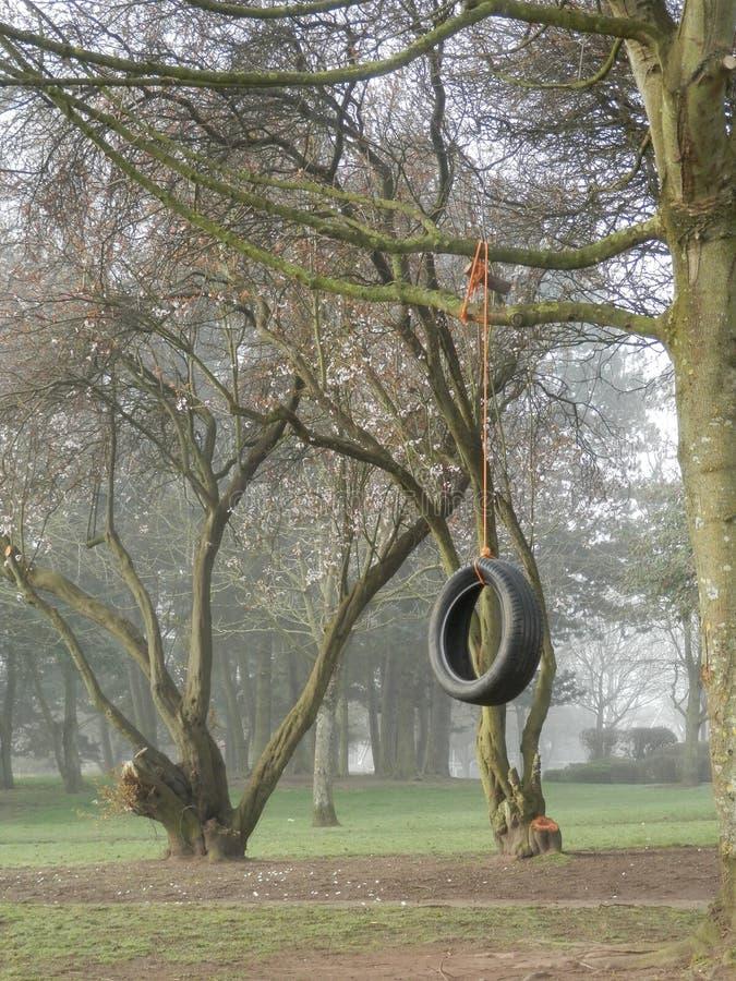 Reifen-Baumschwingen im Park auf nebeligem Morgen stockfotos