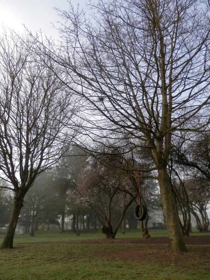 Reifen-Baumschwingen im Park, nebeliger Frühlingsmorgen stockfoto