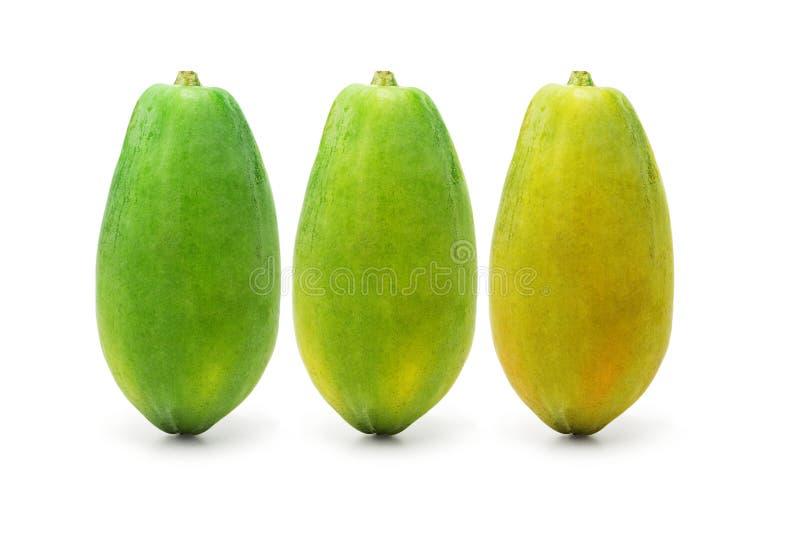 Reifende Papayafrüchte lizenzfreie stockfotos