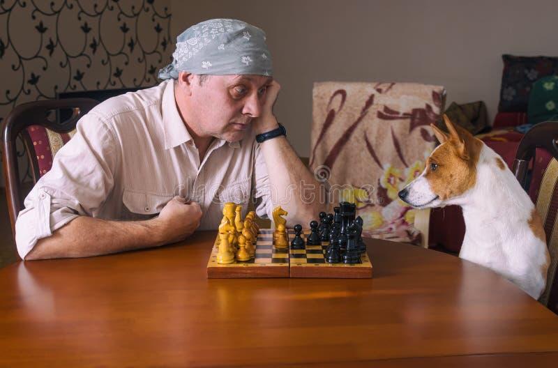 Reifender Mann mit Bandana, der in einem Schachturnier hart auf seinen Basenji-Hunderivalen sitzt lizenzfreie stockfotografie